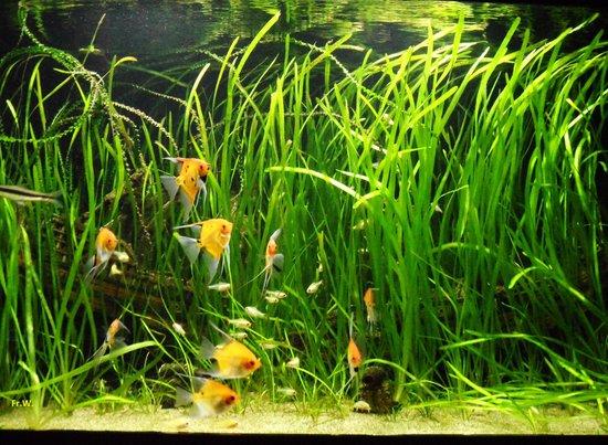 Aqua Expo: Een van de aquaria .
