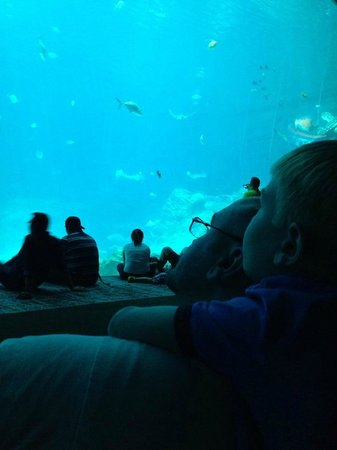 Georgia Aquarium: My son and I watching for over an hour.