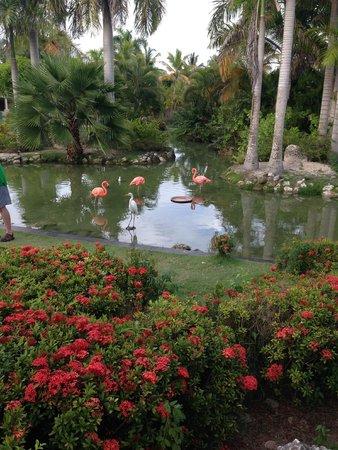 Meliá Caribe Tropical : Hotel Grounds
