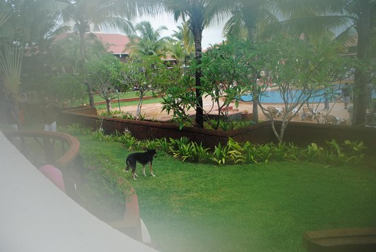 Caravela Beach Resort: Dog Roaming Near Rooms