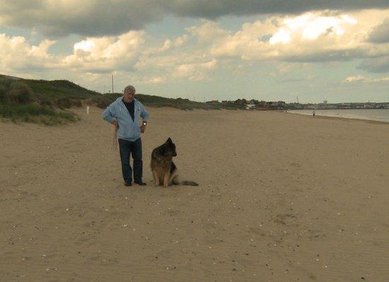 Seagulls  Bridlington: quite dog friendly beach