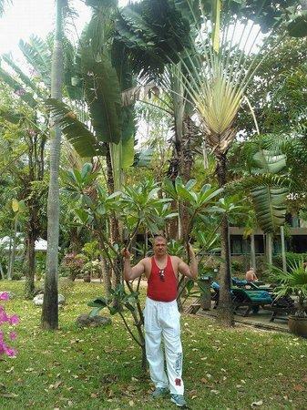 Green Park Resort : вид со всех номеров на этот сад