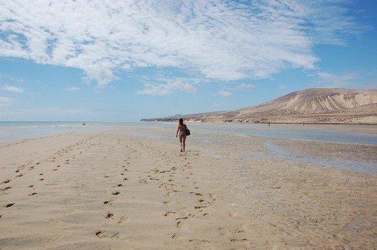 Melia Gorriones Fuerteventura : playa frente al hotel