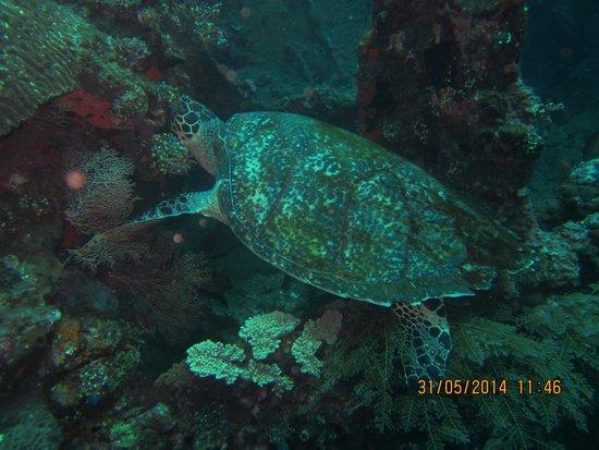 Coral View Villas: Scuba diving at USS Liberty Ship Wrech