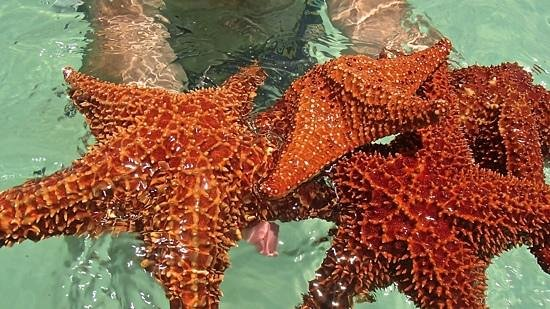 Luxury Bahia Principe Bouganville Don Pablo Collection: остров Саона и морские звезды