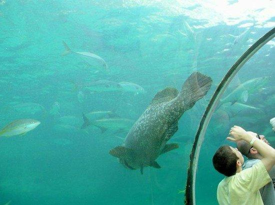 Hotel Riu Palace Paradise Island: Aquarium atlantis