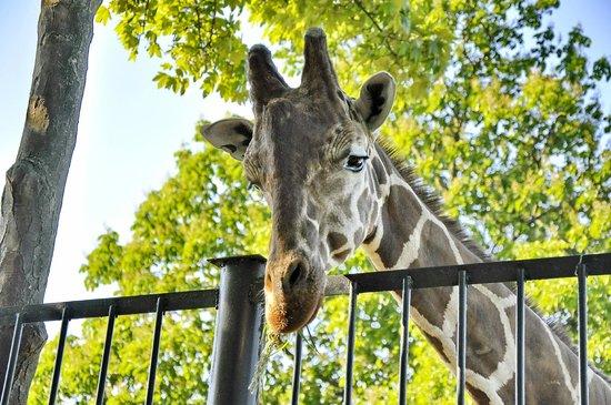 Калининградский зоопарк: Мне сверху видно все!