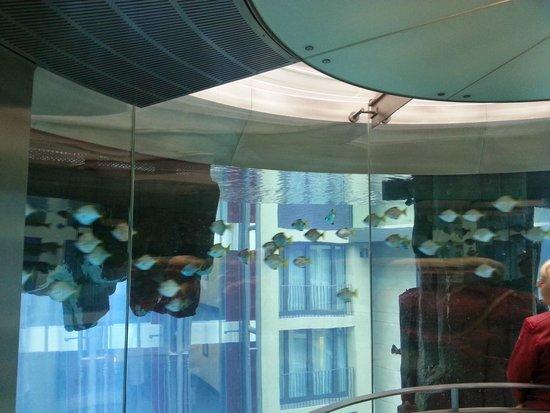 AquaDom & SEA LIFE Berlin: Лифт