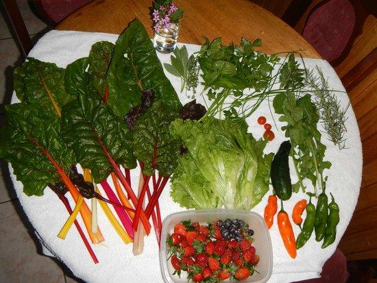 Los Pinos - Cabanas y Jardines: Yum!
