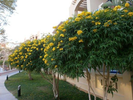 Marina Plaza Hotel Tala Bay : Hotellin sisäpihalta