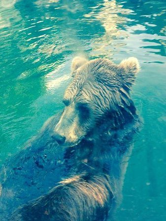 Budapest Zoo & Botanical Garden: Bear came to say hi and put his paw against the glass when we did - amazing!