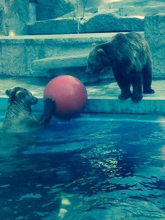 Budapest Zoo & Botanical Garden: playing with their ball