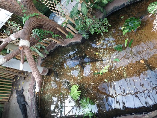 Budapest Zoo & Botanical Garden: Alligators; didn't move for over 20mins
