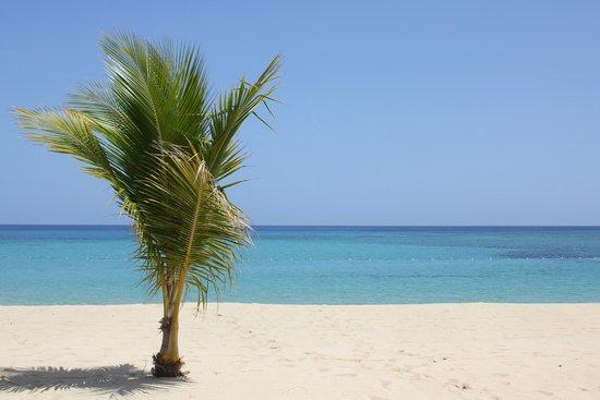 Jamaica Inn: Fab beach
