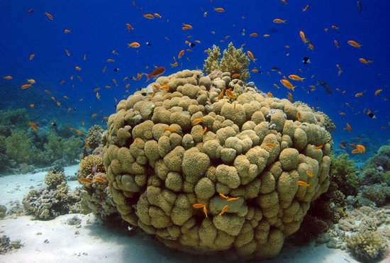 Tamra Beach: barriera corallina