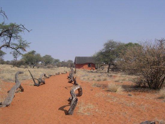 Zebra Kalahari Lodge: la stanza