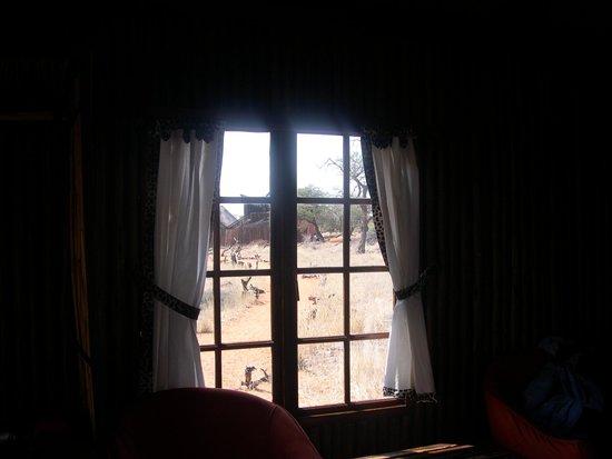 Zebra Kalahari Lodge: finestra