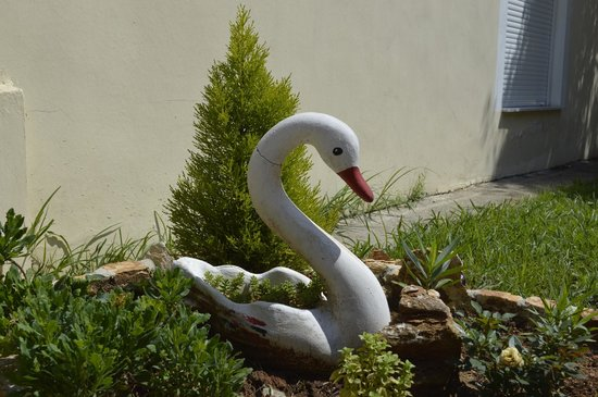 Antigone View Apartments: A swan in the garden