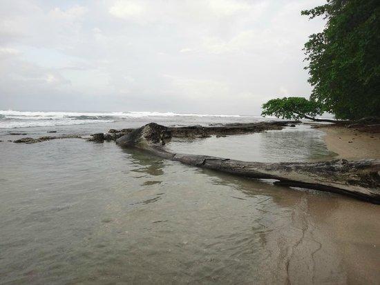 Rocking J's: Playa
