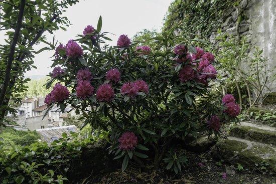 Bassin jardin deden picture of le jardin d 39 eden tournon for Le jardin d eden