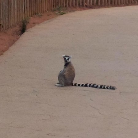 Jardin Zoologique National de Rabat : Walking around but got scared away