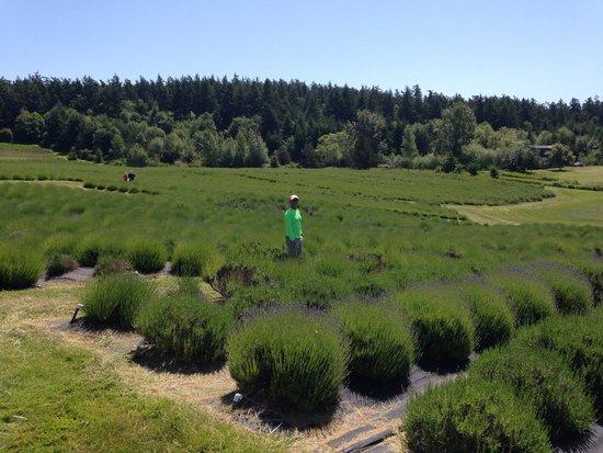 Pelindaba Lavender Farm: Yet to bloom, but still beautiful fields. The hubs even like it!