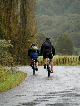 Whanganui National Park : Whanganui River Road