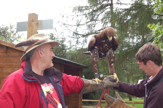 York Bird of Prey Centre: The amazing Storm