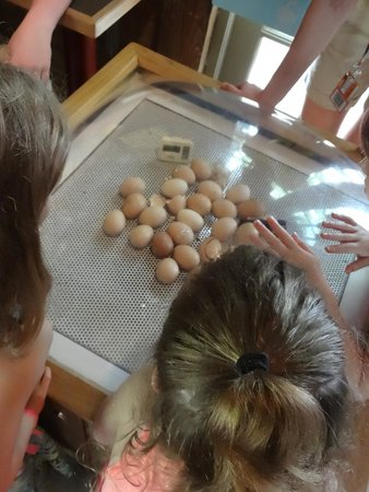 Children's Museum of Houston: We got to see some baby chicks hatch!