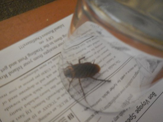 Sandals Ochi Beach Resort: Cockroach in room