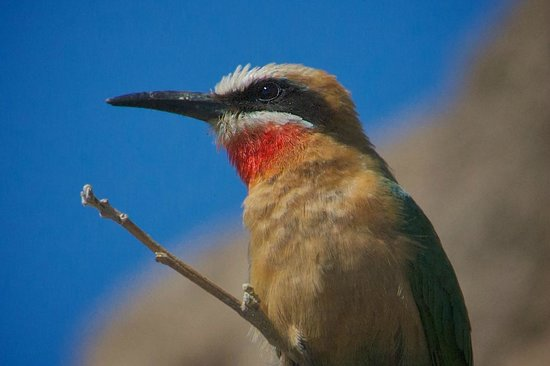 Muchenje Safari Lodge: one of many beautiful birds