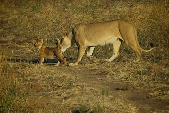 Muchenje Safari Lodge: Lioness and cub was a highlight