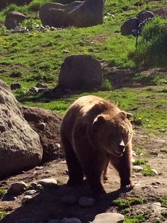Montana Grizzly Encounter: Sheena