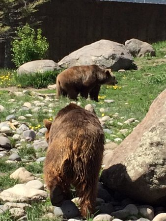 Montana Grizzly Encounter: Jake and Maggie