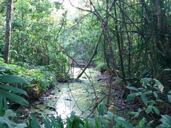 Linger, Palathra Heritage Mararikulam : Nice view in Kumarokam bird sanctuary