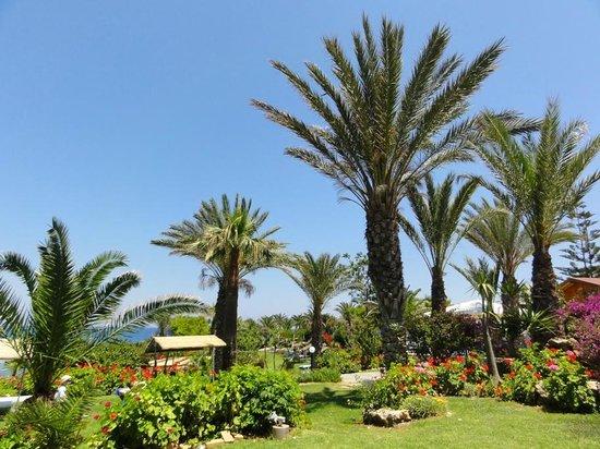 Crystal Springs Beach Hotel: Garten