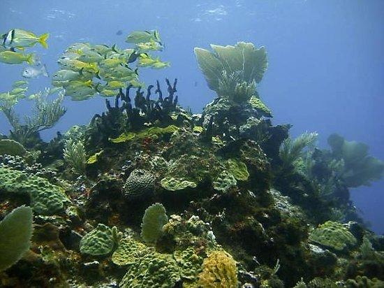 Paradise Divers: reef