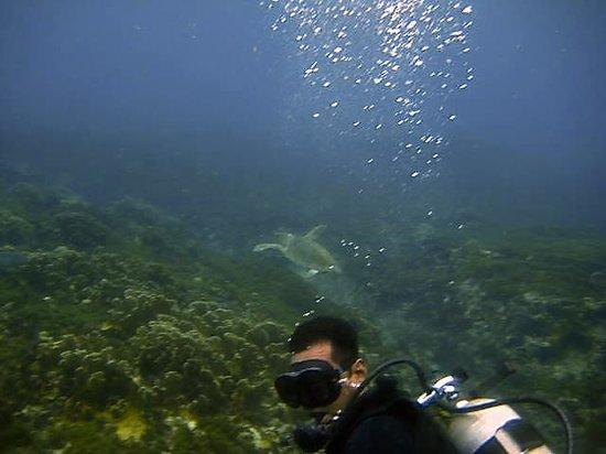 Paradise Divers: Ivan
