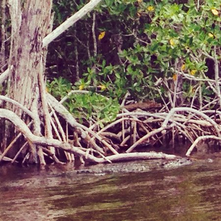 Everglades City Airboat Tours : Trying to blend in ;)