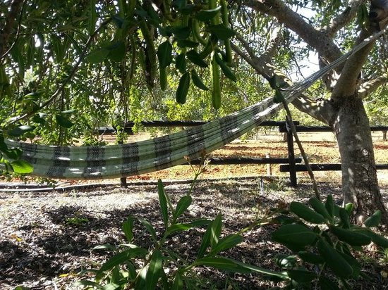 Casa de Cacela: Lying under the carob tree