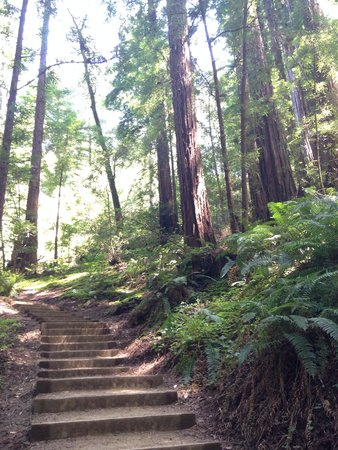 Muir Woods National Monument: Off the main trail