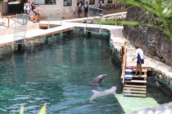 Xcaret Eco Theme Park: Dolphins