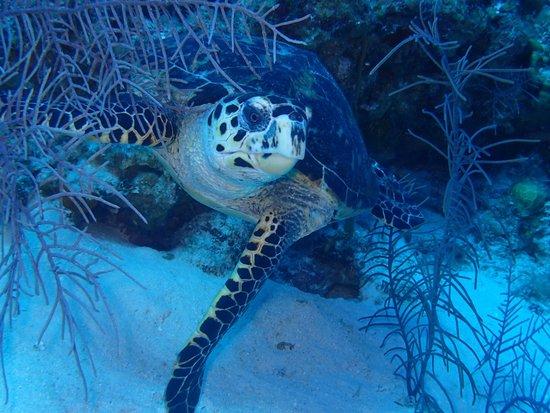 Diving at lonestar ledges with deep blue divers picture - Dive deep blue ...