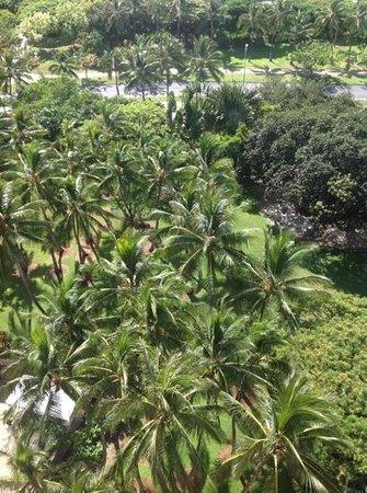 Hale Koa Hotel: palm trees around Hale Koa
