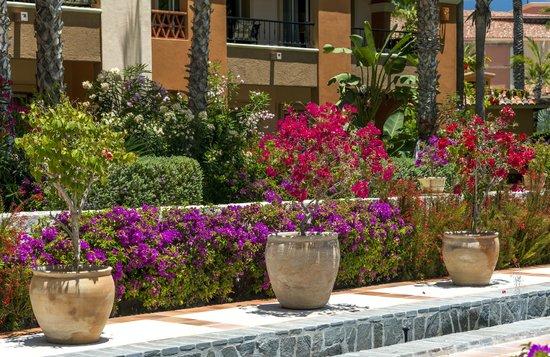Hacienda del Mar Los Cabos : Gardens