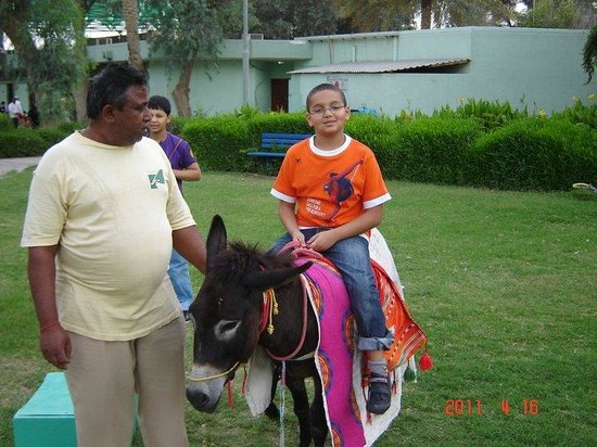 Doha Zoo : Ride the donkey