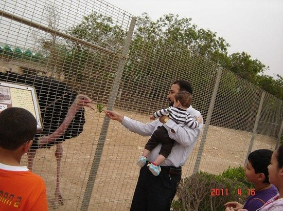 Doha Zoo : Feeding the ostrich