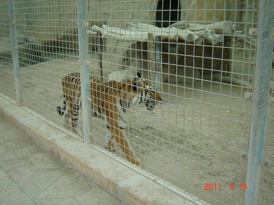 Doha Zoo : My friend