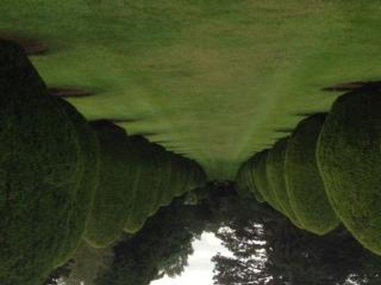 The Elvetham : Topiary Avenue