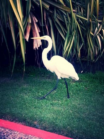 Natura Park Beach - EcoResort & Spa: cranes and othe exotic birds on the grounds